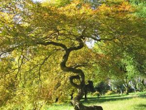 batumi-botanical-gardens